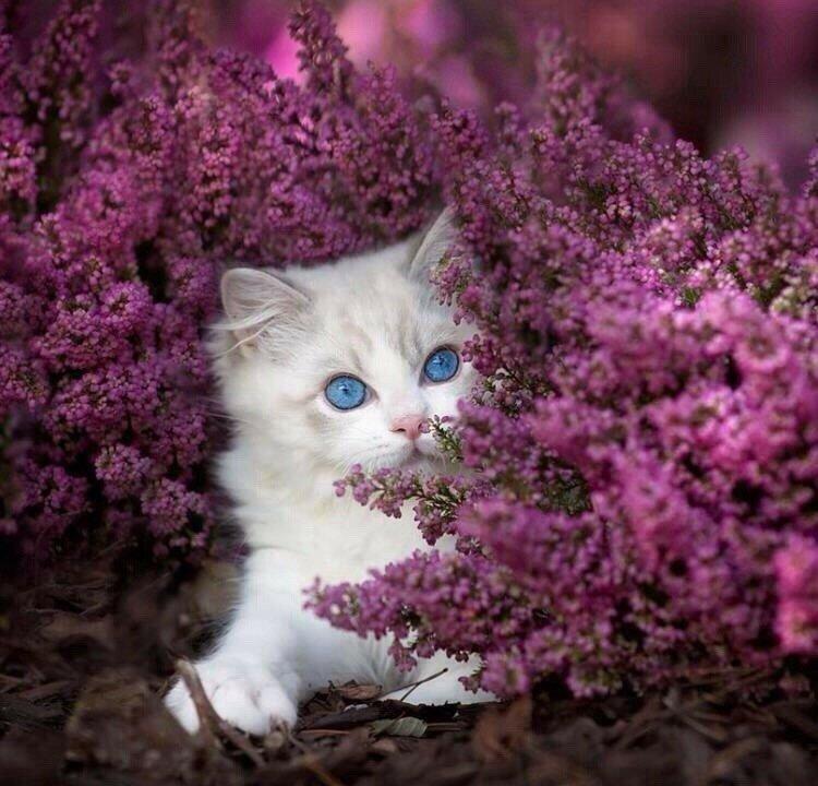 картинка красивой белой кошки в цветах покинул пост главы