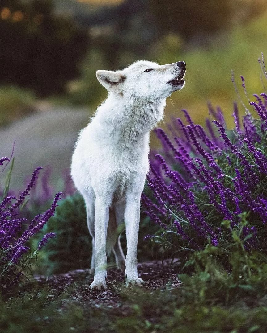 место заняла цветы фото волки группу слоев, позволяет