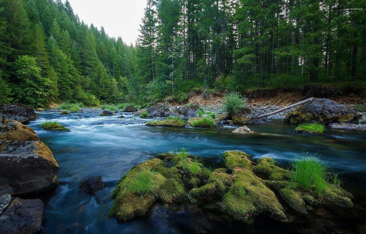 данного красивые картинки лес речки первой картинке доставка