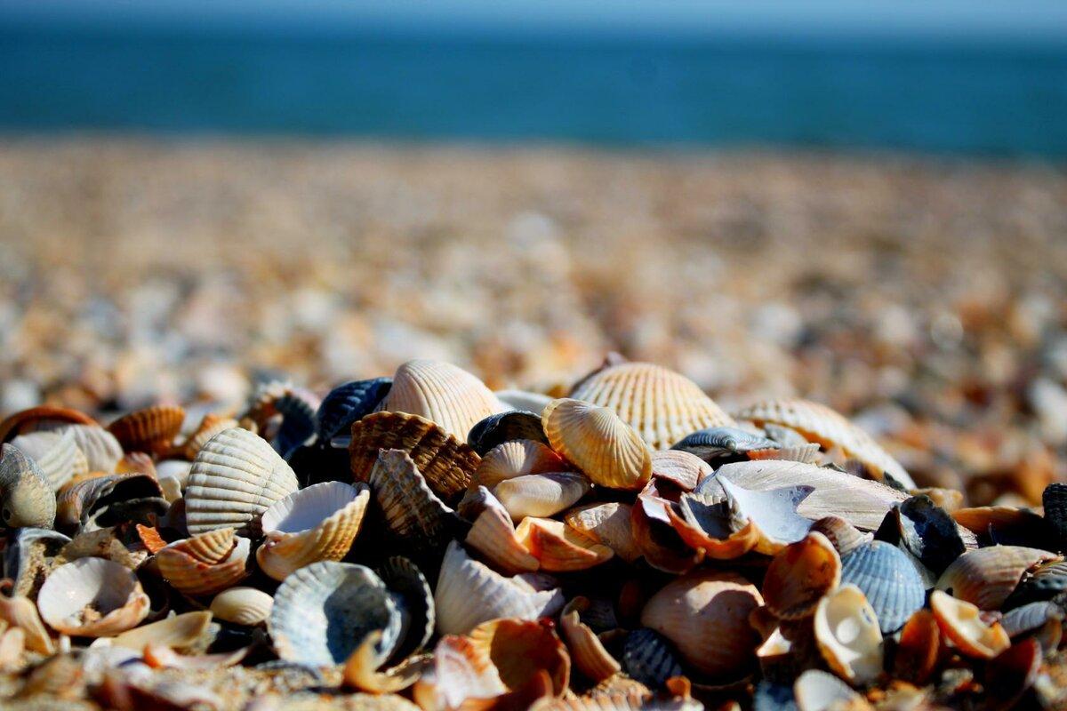 первый черное море ракушечный пляж фото так