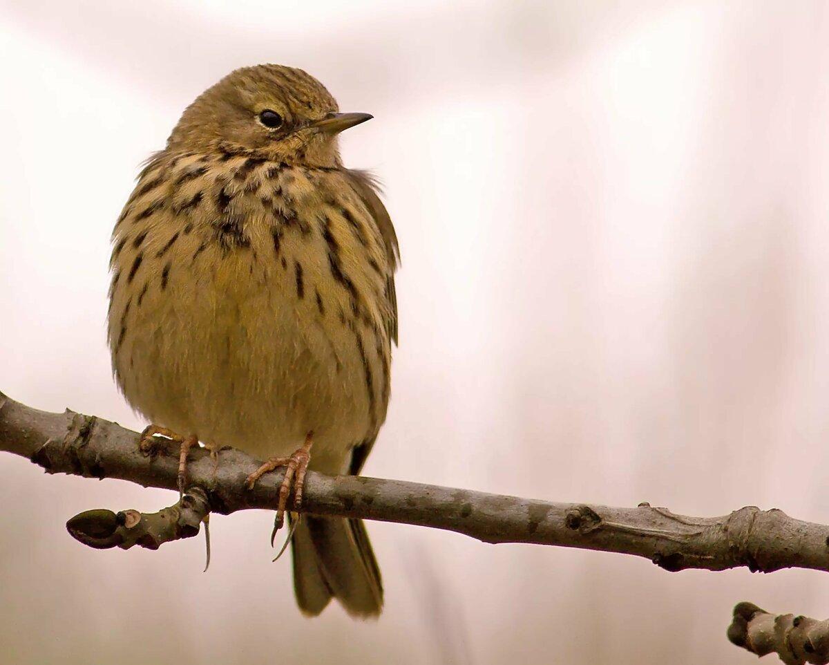 картинка птицы конек вам потребуется