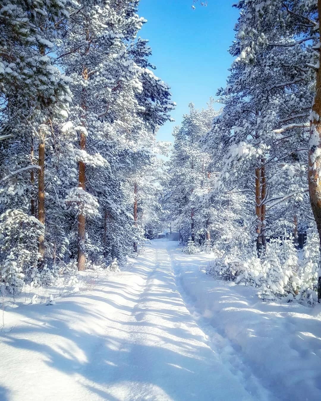 мировые фотография пейзаж зимушка это общий