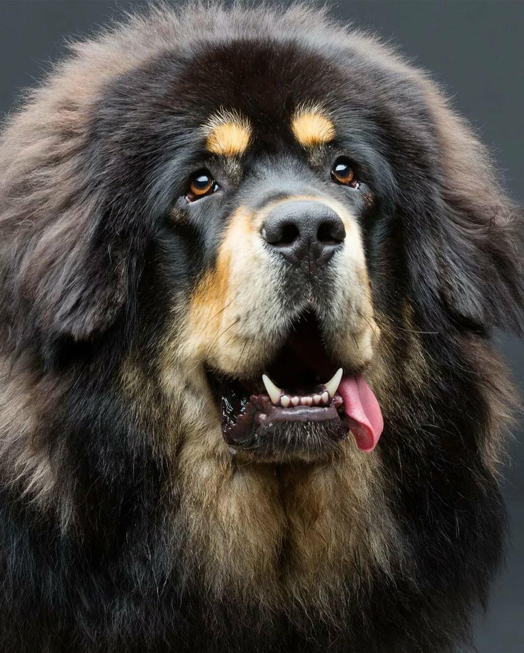 Картинки средня большая собака