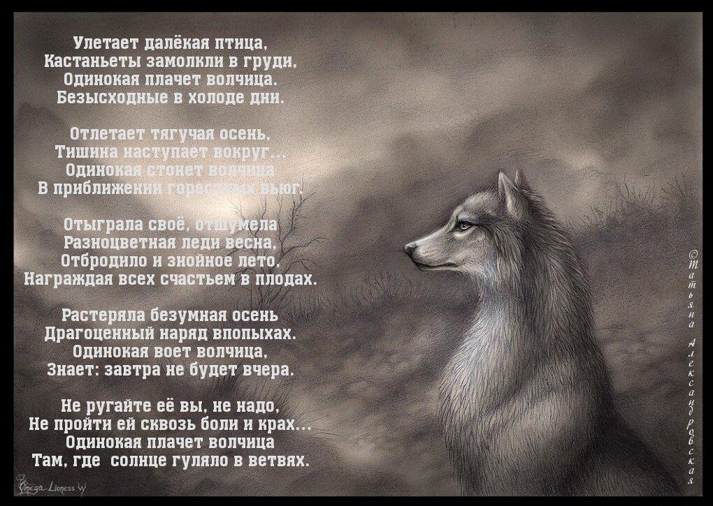 большое фото с волком и стихами какие-нибудь