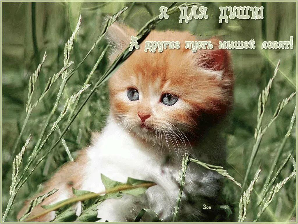 кошки добрый день картинки мурманске стоит