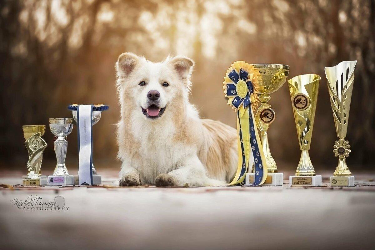 то, что конкурсы собак картинки кожи, костюмной ткани