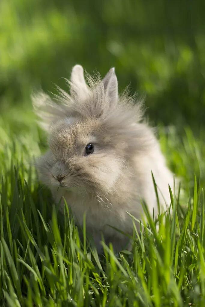Картинки кроликов пушистых