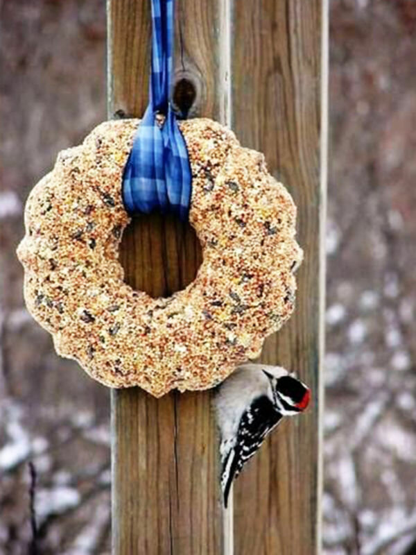 Угощение для птиц картинки