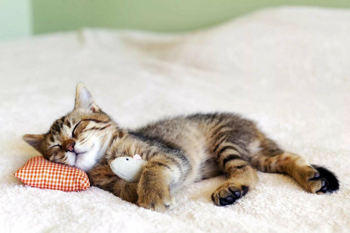 эти установки фото спящие котята много счастливых моментов