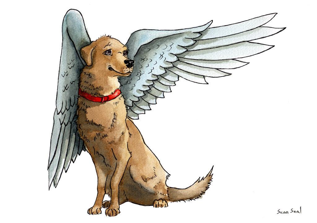 Картинки крылатых собак