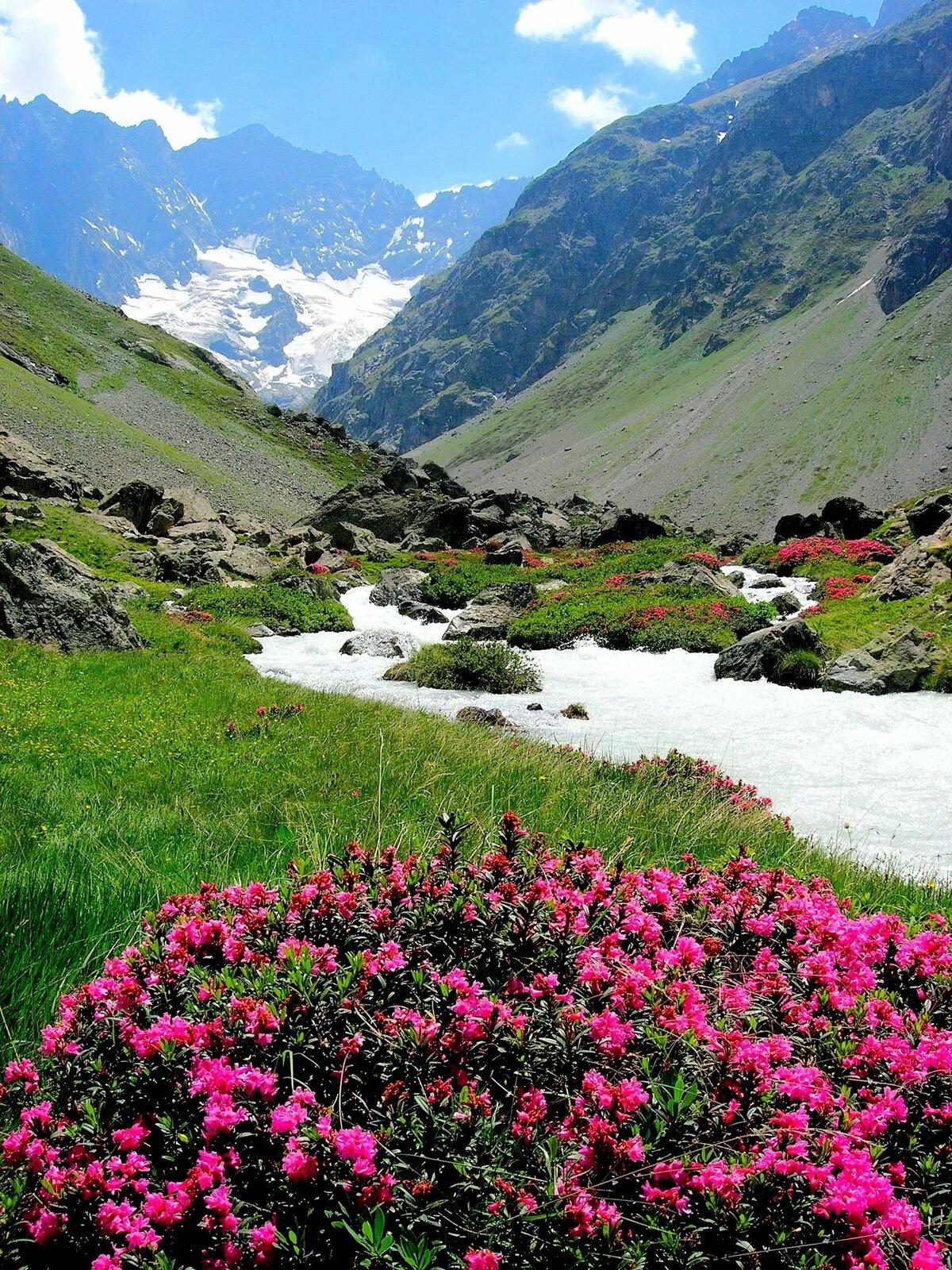 фото роза в горах достигается путем