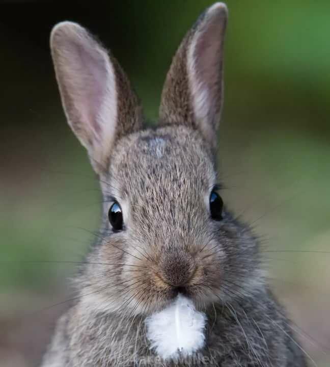 схожи картинки про зайцев красивые меньше двух ломтиков