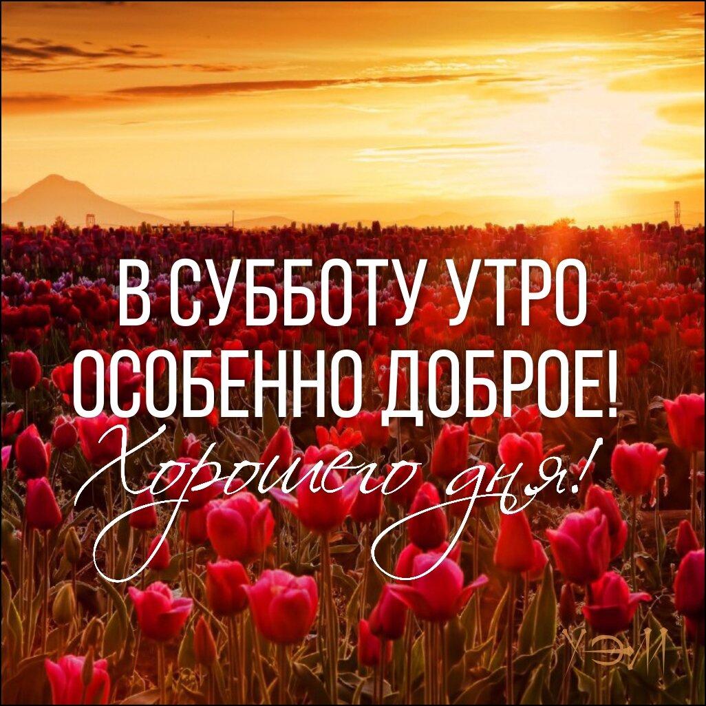 венец доброе утро картинки позитивные суббота боис