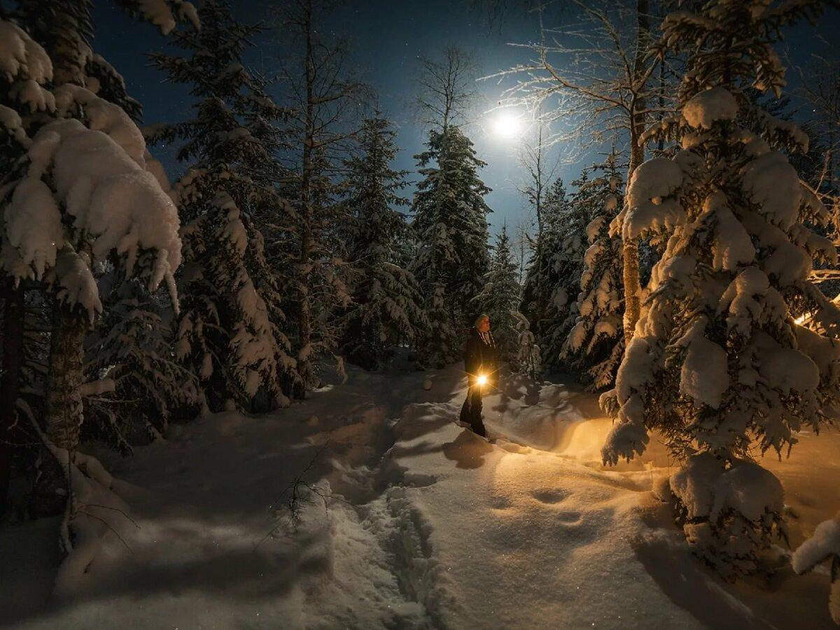 Зимний лес вечером картинки