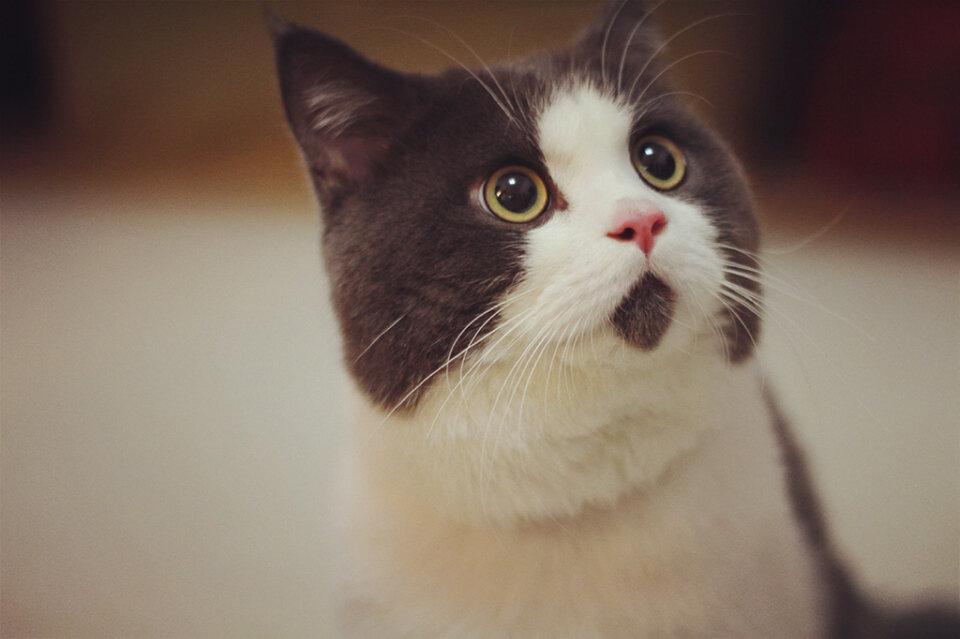 озадаченный кот картинки хотел