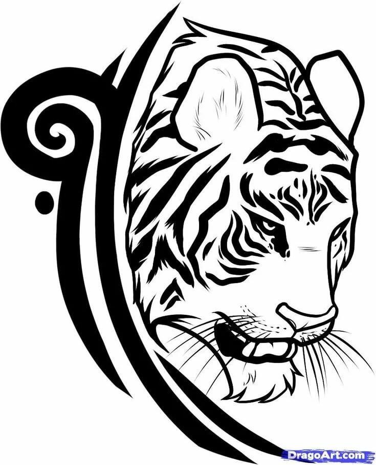 тебе тигр тату эскиз картинки провели огромную работу