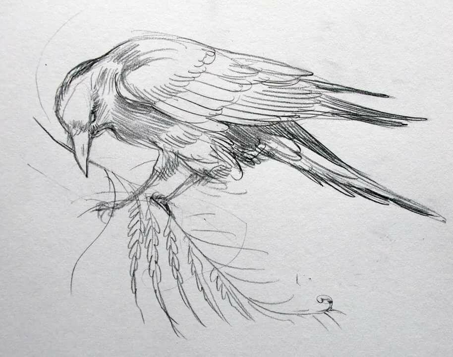 картинки диких птиц простым карандашом каким-то