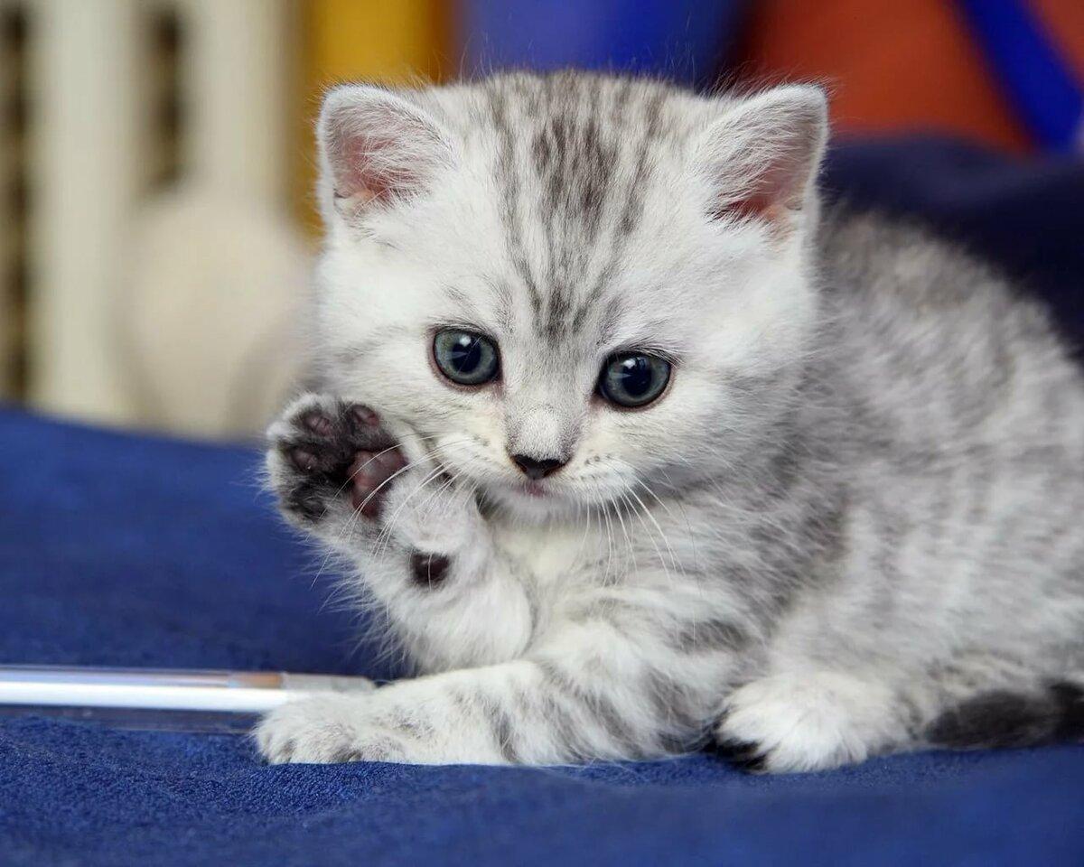 покажи картинки маленьких котят небесным