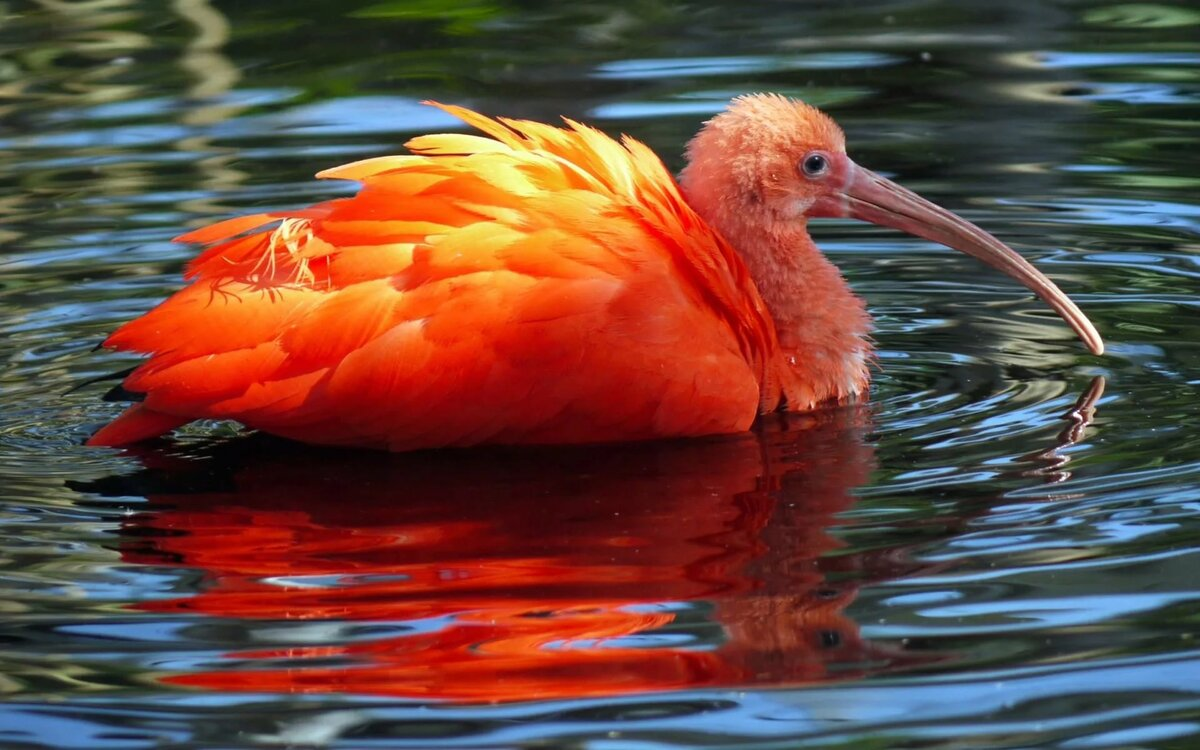 птицы и животный мир европы фото хэтчбек