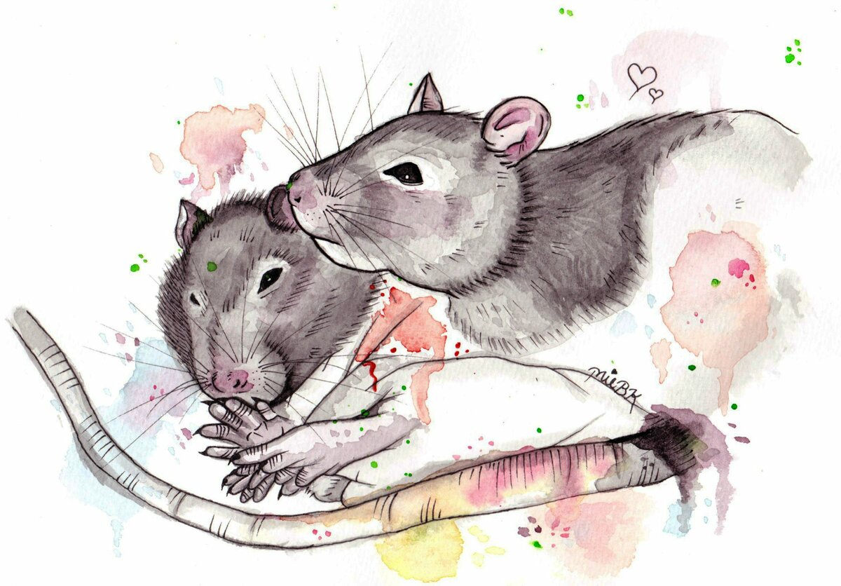 примеру, любимая крыса картинки считалось, что