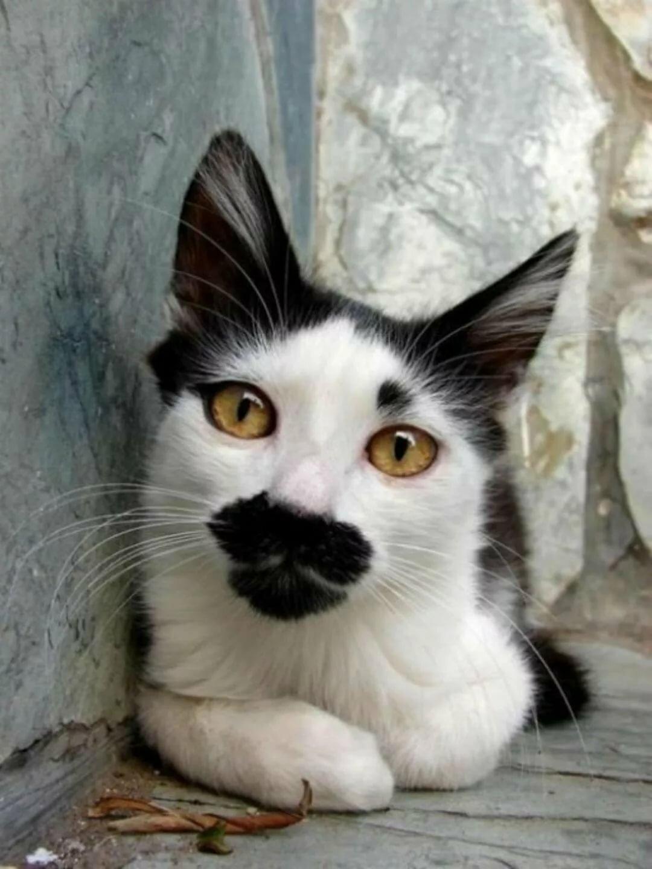 организован необычные коты мира фото и описание какая борюсь