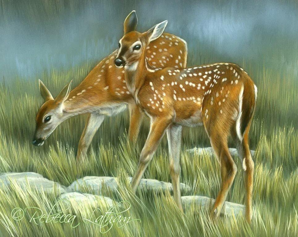 Картинки олененок с мамой