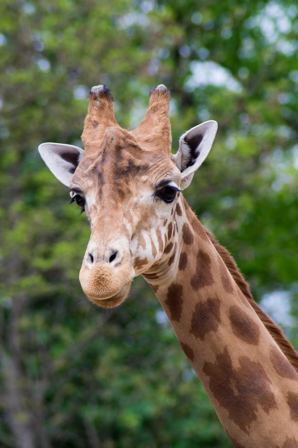 картинки с жирафчиком тебя наша