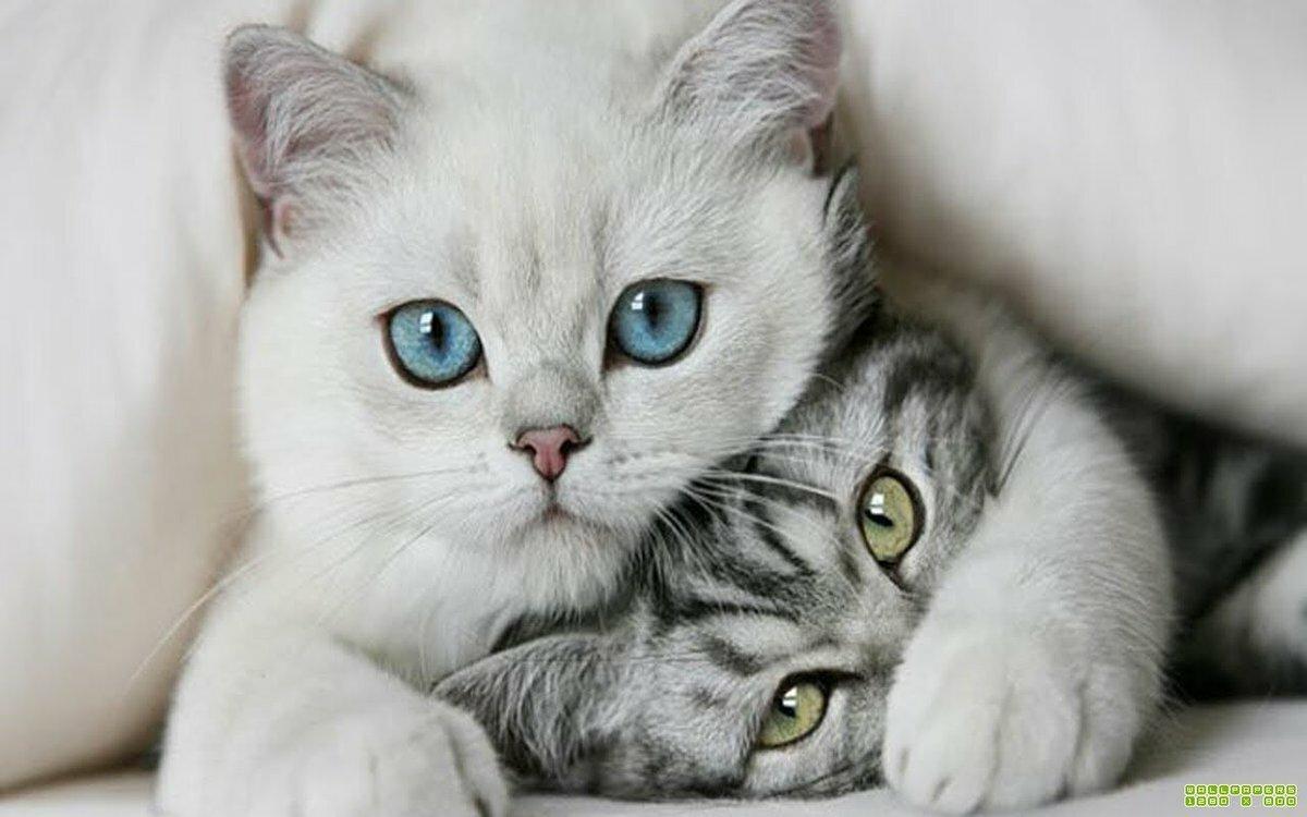 Картинки с надписями котик мой красивые