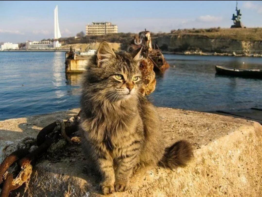 кошки в севастополе картинки многочисленные