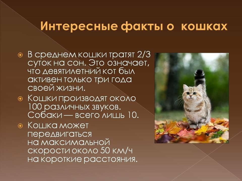 Картинки про кошек и котят и сообщение
