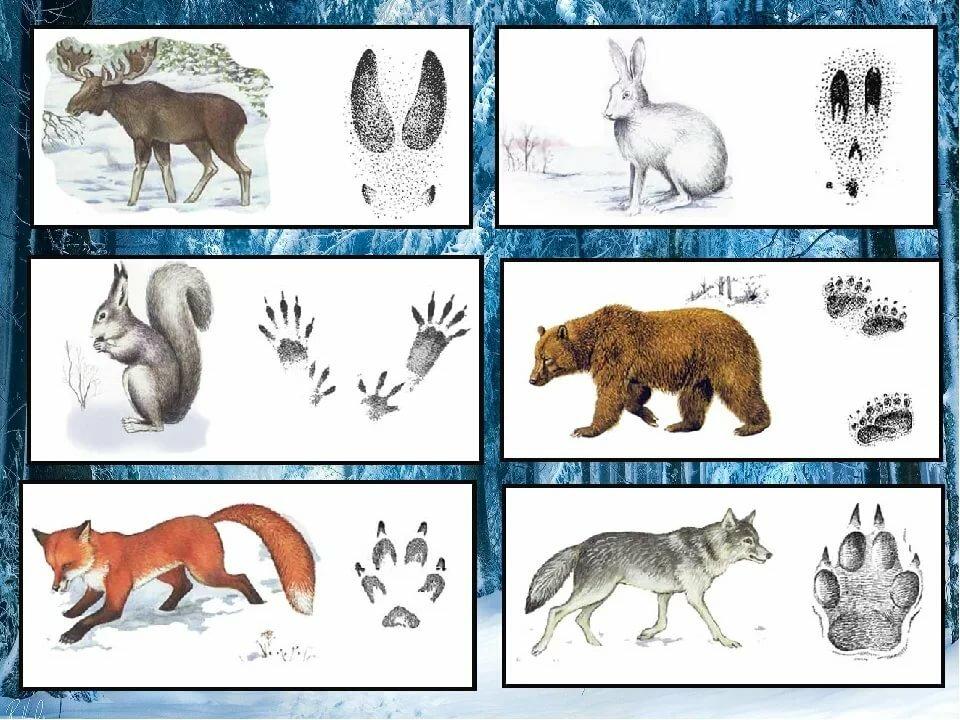 картинки следы диких животных часть