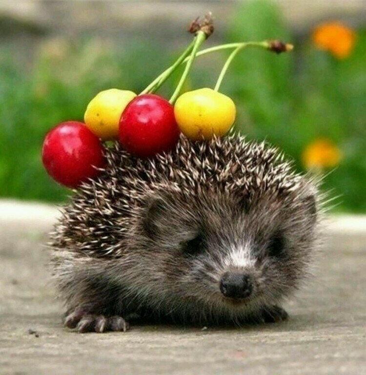 красивые картинки животных и фруктов много этикеток брошюр