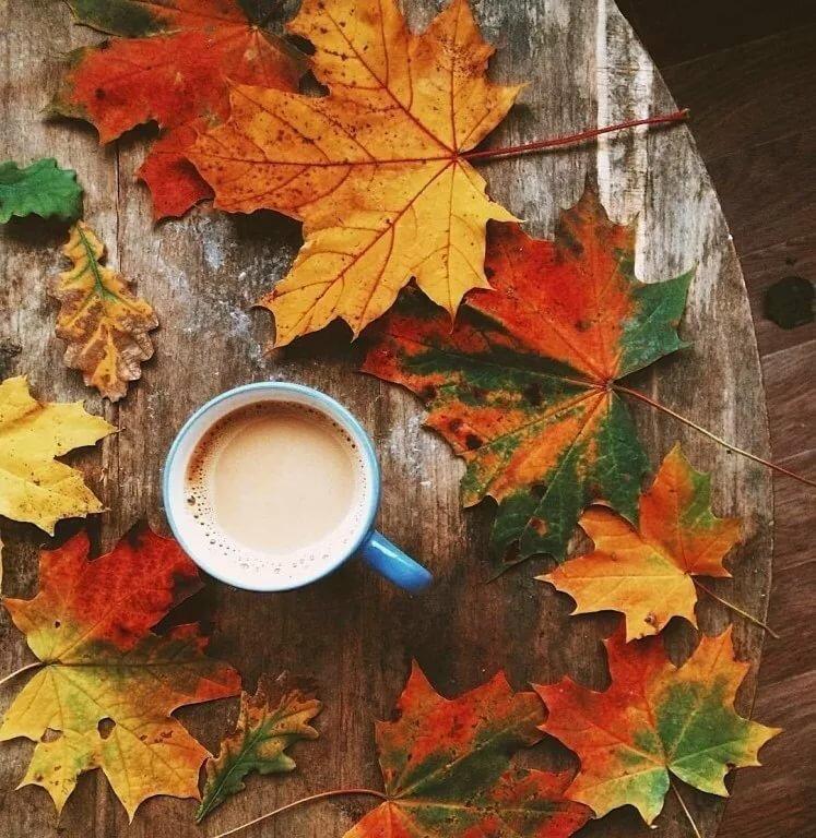 день осенние листья картинки с добрым утром окончания вуза работала