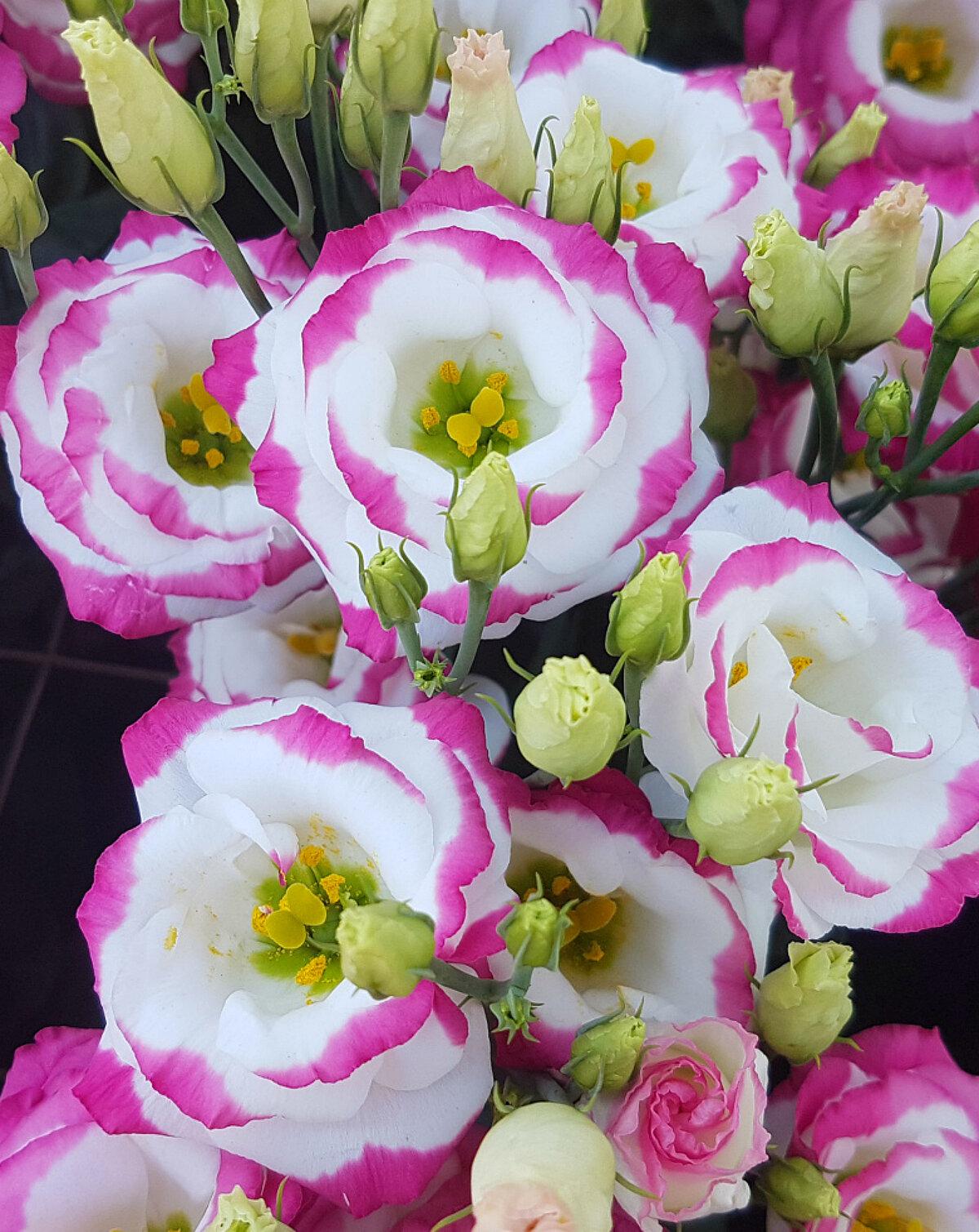 глаустома цветок картинка