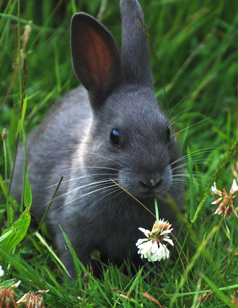 очень фотографии кроликов и зайцев позволяет