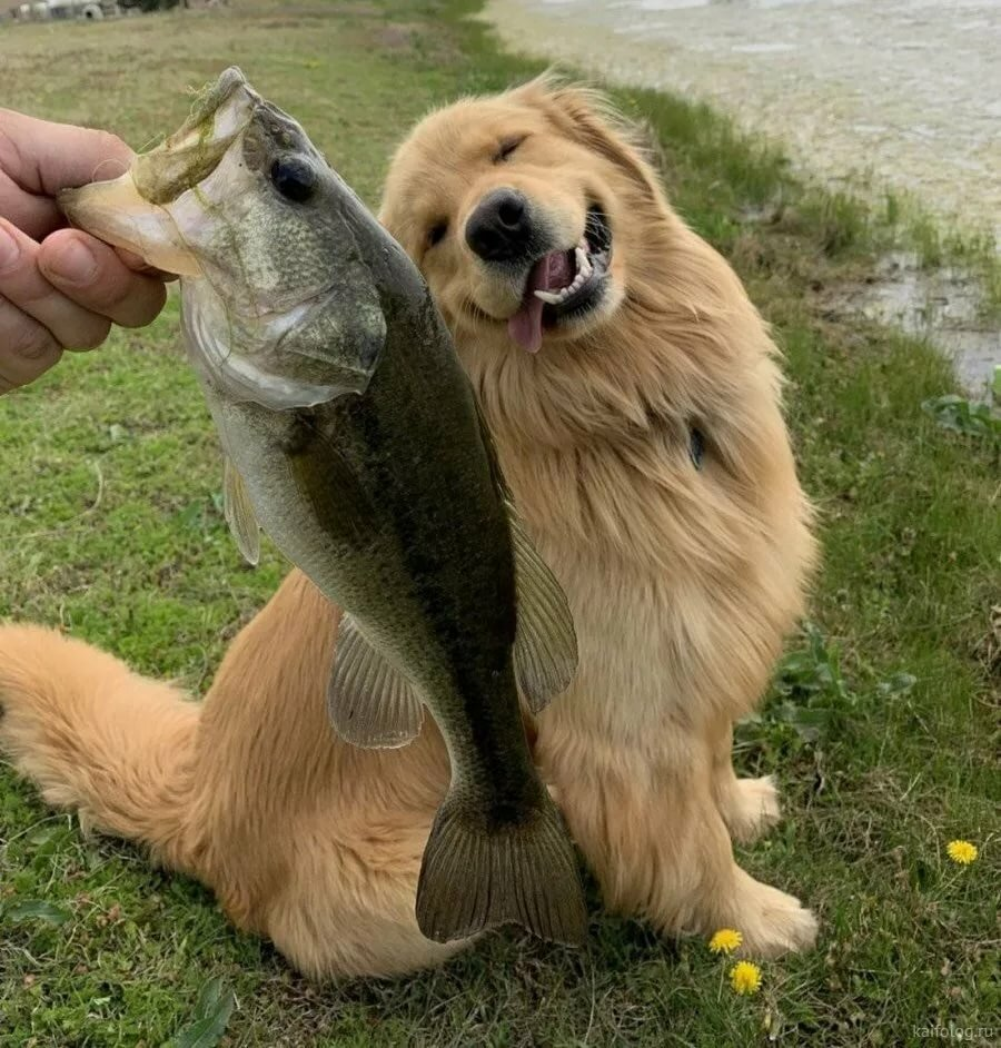 приколы фото с рыбой фото