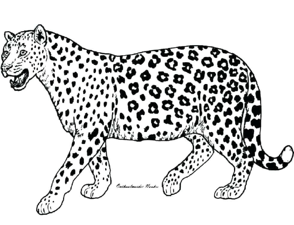 Картинки с леопардами для раскрашивания