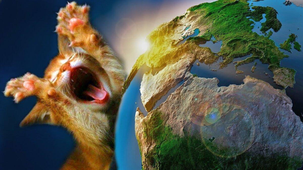 коты захватили мир картинки смысловое значение
