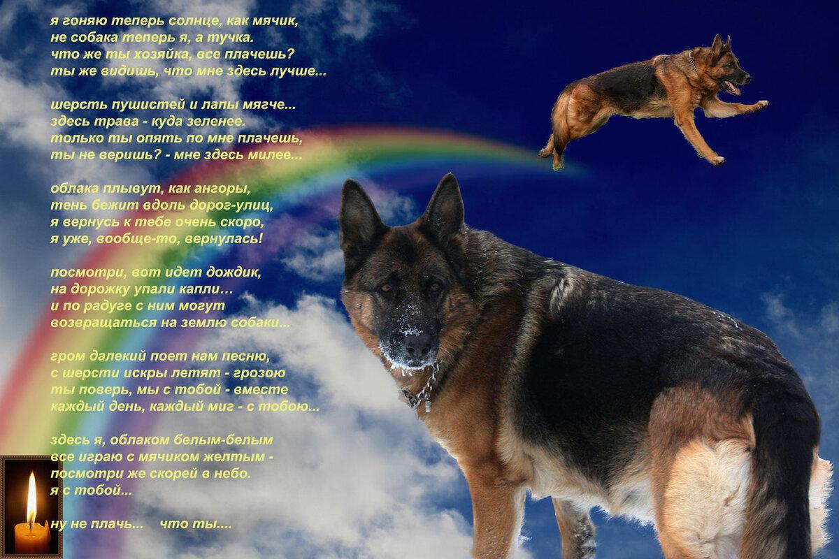 стихи собакам ушедшим стала столицей