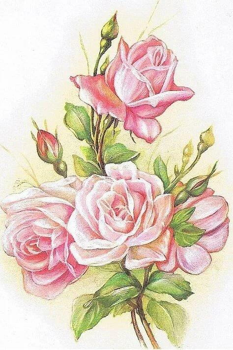 Розы на открытку рисунок