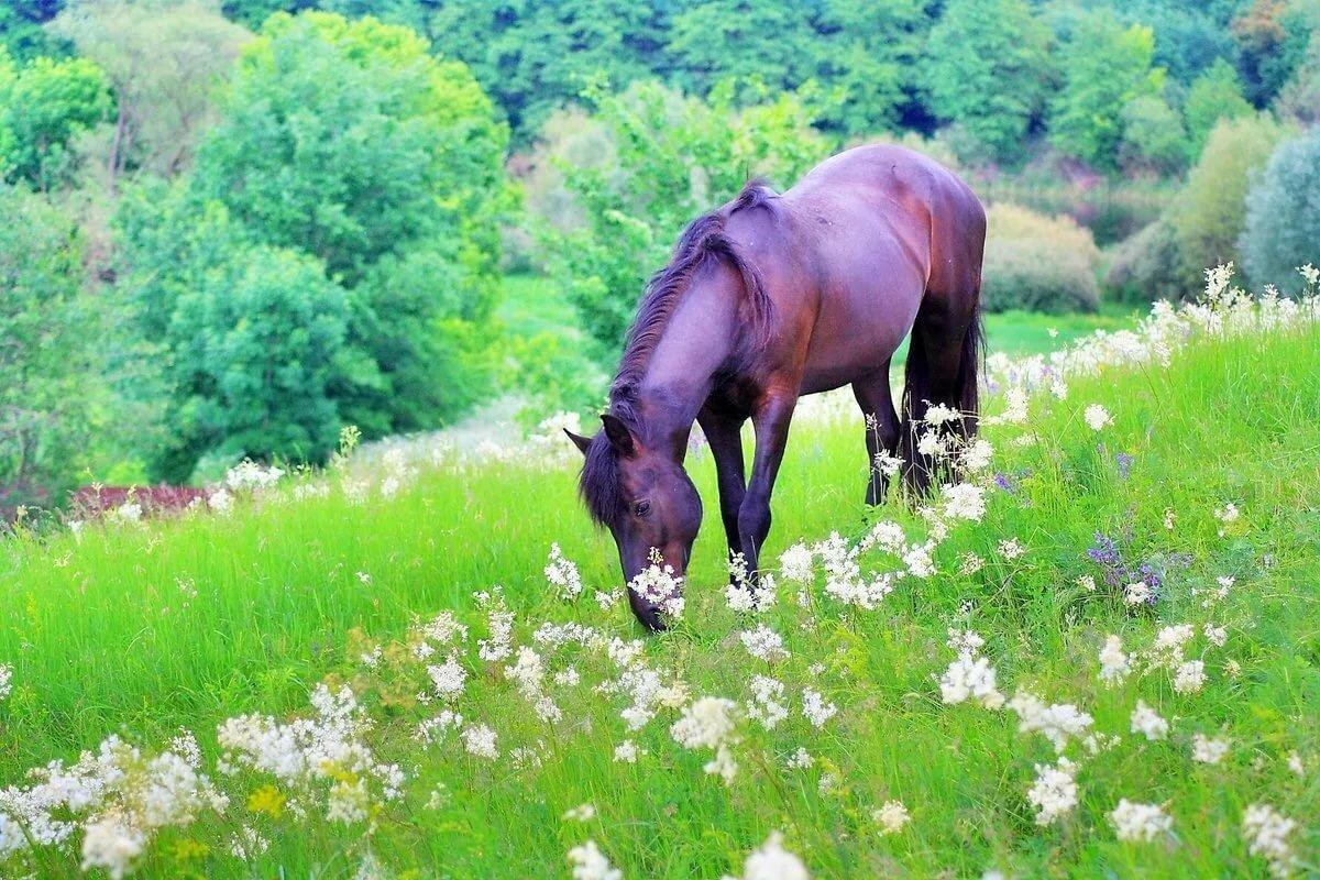 картинки конь на лугу решил разобраться