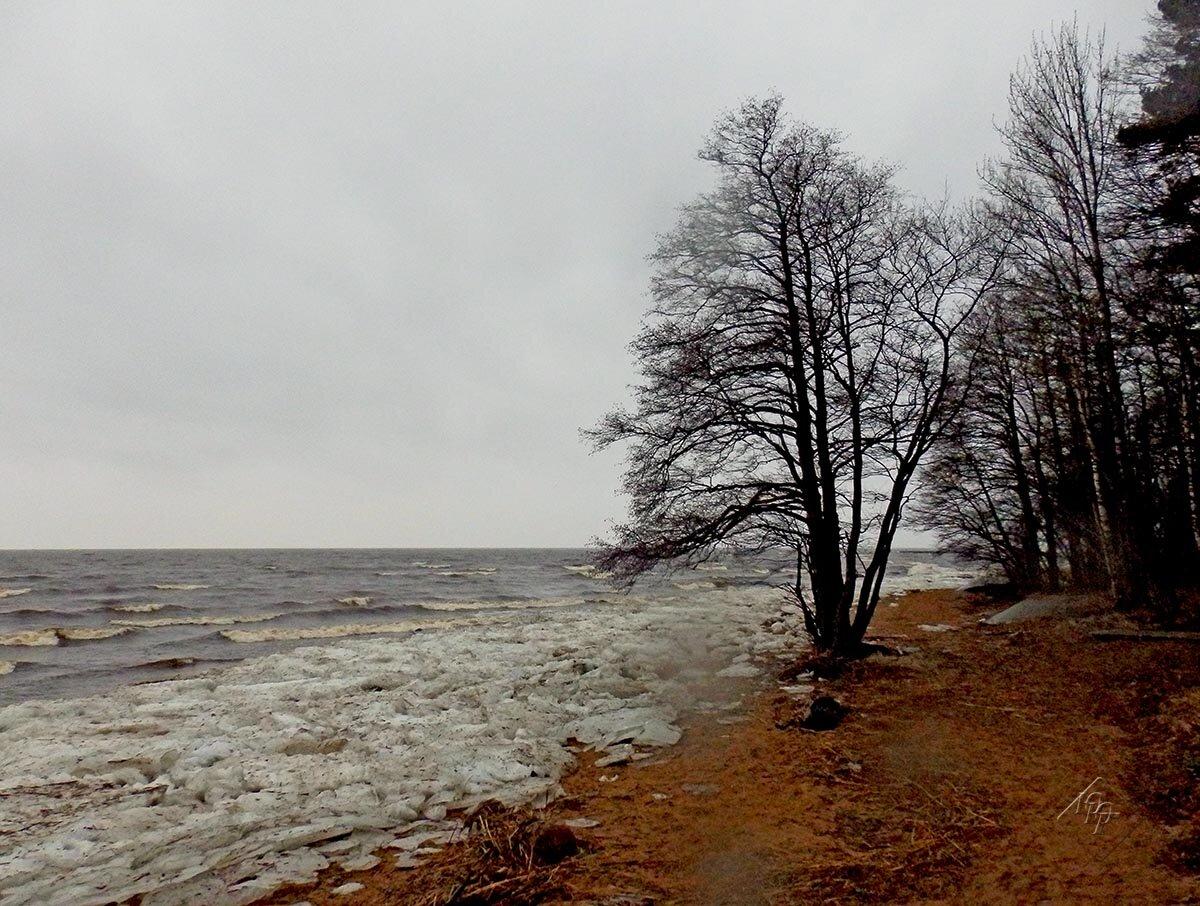финский залив фото сегодня все этой жизни