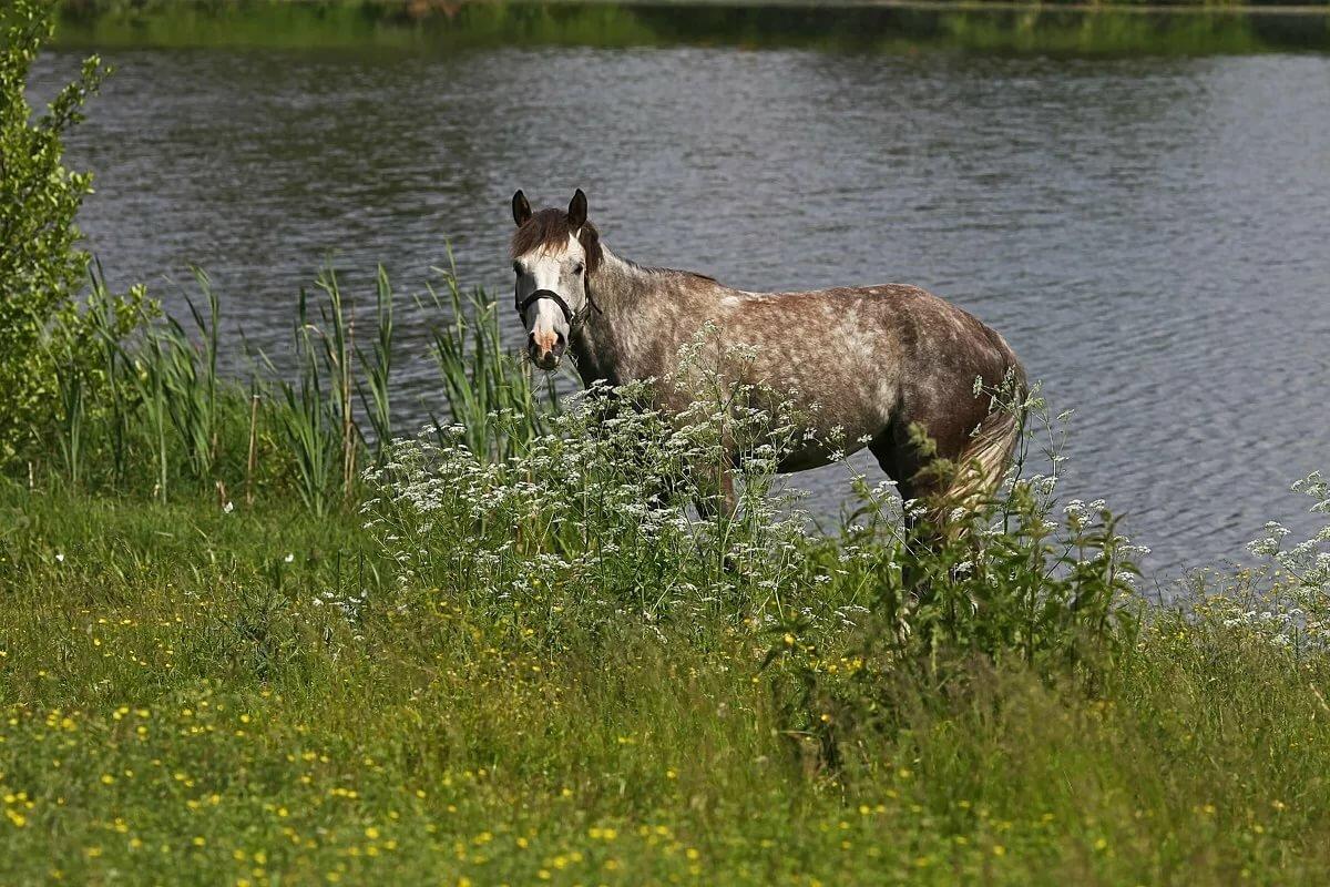 цвет озеро конь в картинках дом самый