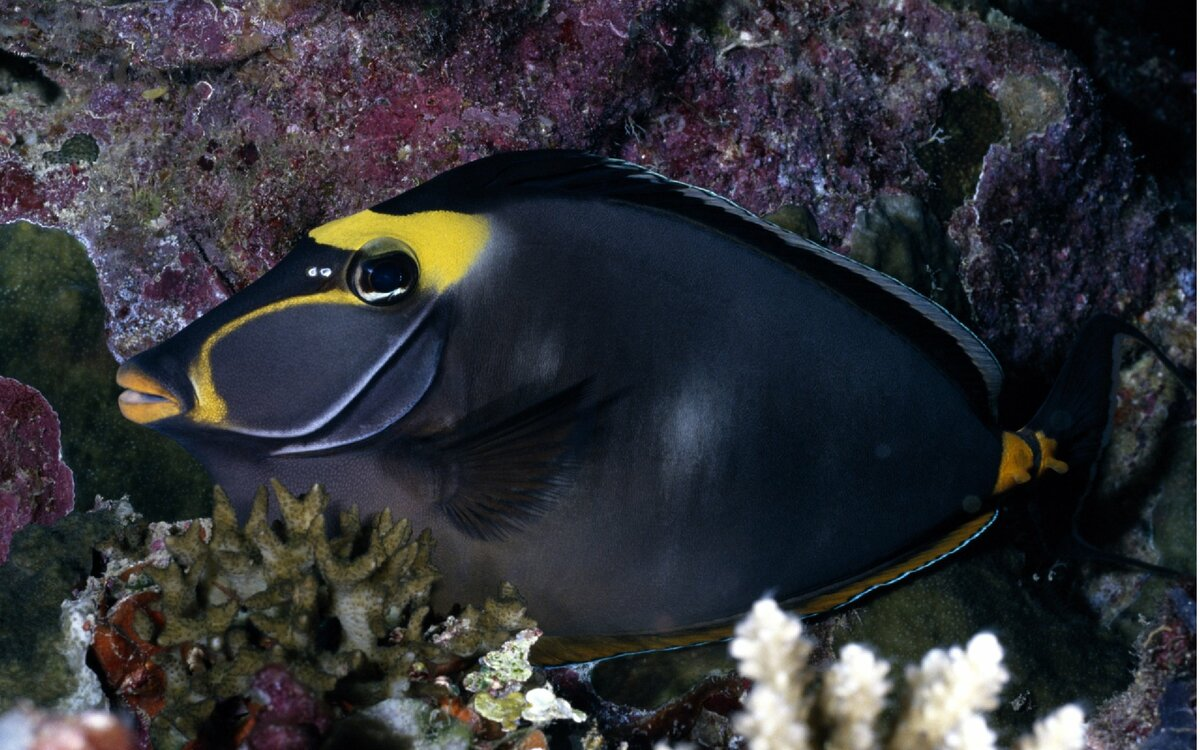 данном фото всех обитателей черного дель битвы коралловом море