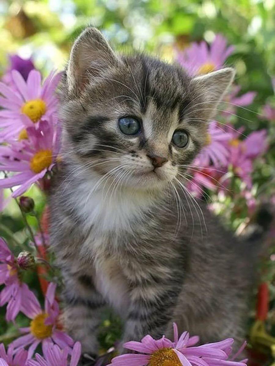 Смотреть картинки котенком