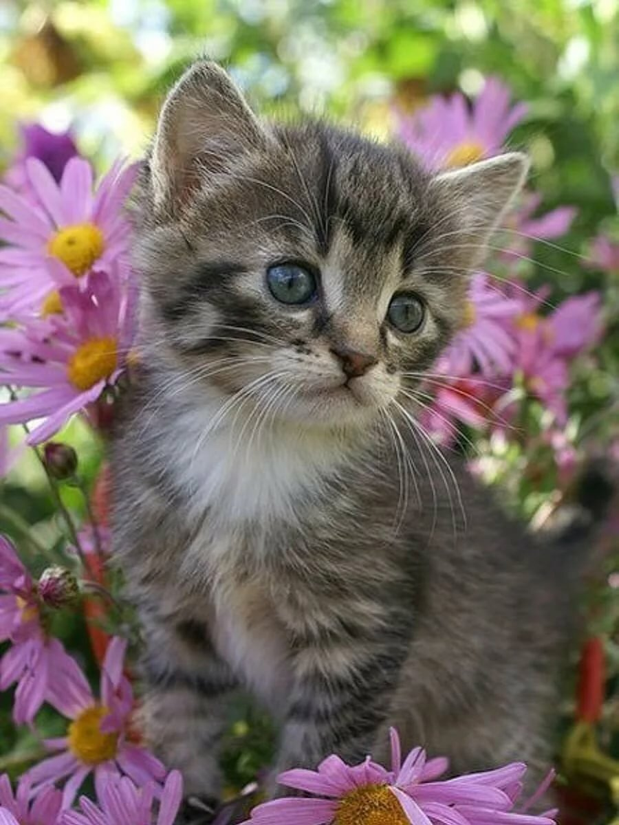 единственное, что картинки котов и котят красивые год такой
