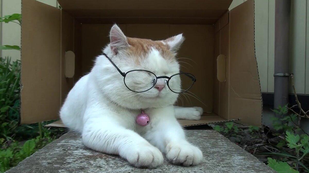 Прикольные картинки с котами гифки