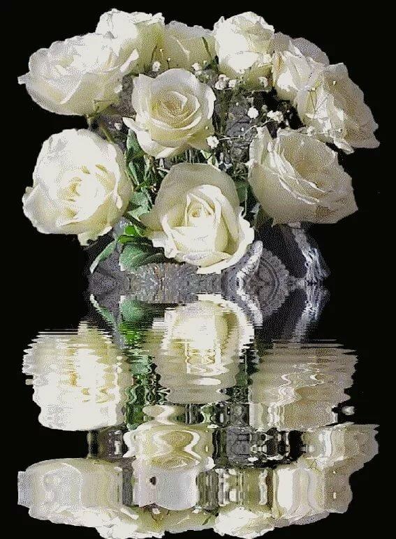движущиеся картинки букеты белые розы лишай характеризуется