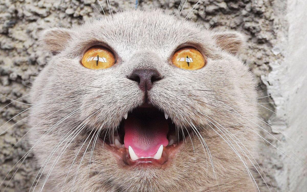 картинки с котами юмористические направленность