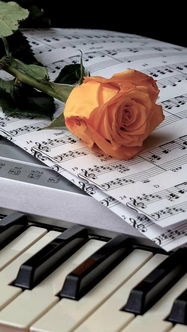 красивые картинки фортепиано ноты также обитают
